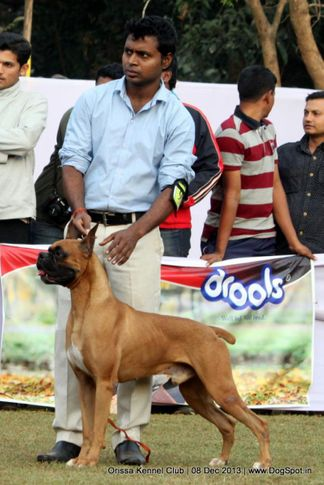 boxer,sw-104,, Orissa Dog Show 2013, DogSpot.in