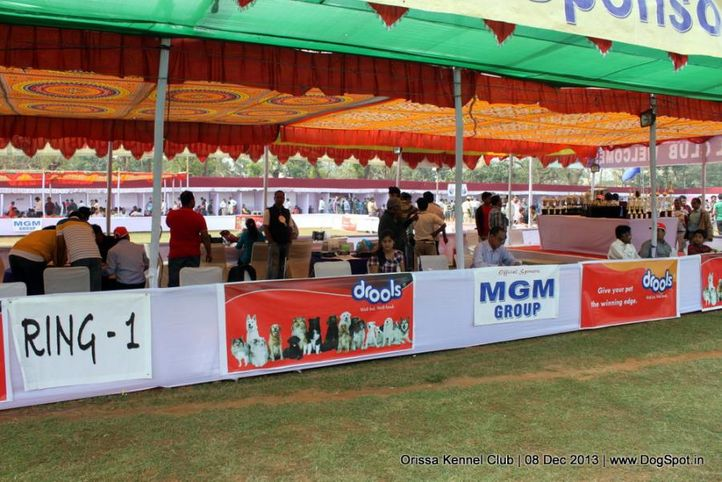 ground,people,sw-104,, Orissa Dog Show 2013, DogSpot.in