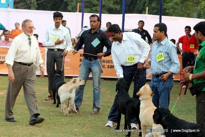 golden retriever,judging,sw-68,, Orissa Dog Show, DogSpot.in