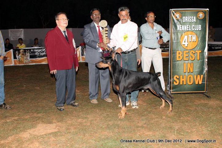 dobermann,line up,sw-68,, Orissa Dog Show, DogSpot.in