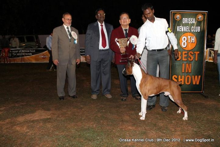 boxer,line up,sw-68,, Orissa Dog Show, DogSpot.in