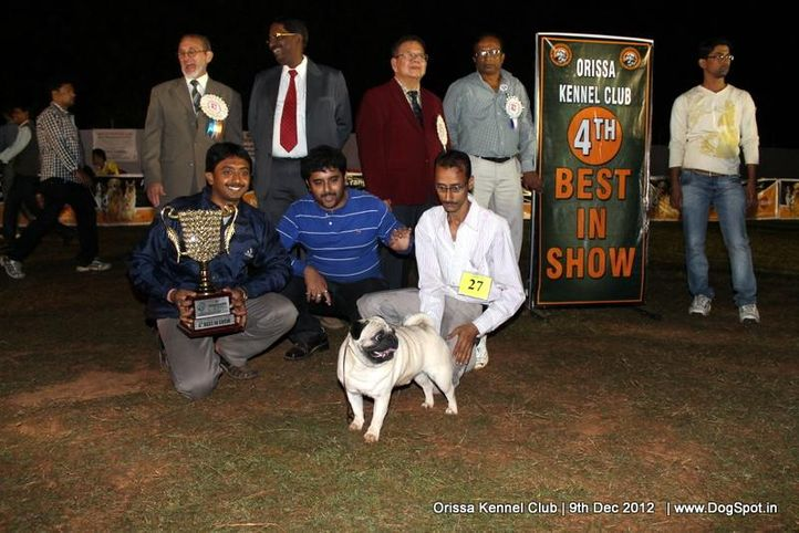 line up,pug,sw-68,, Orissa Dog Show, DogSpot.in