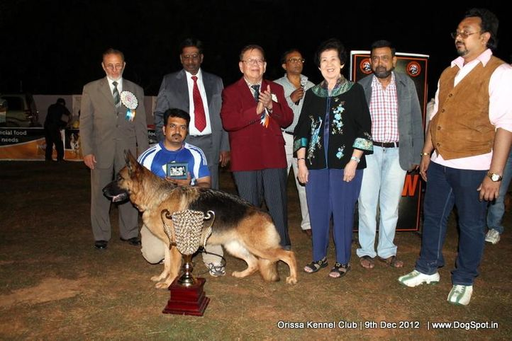 german shepherd,line up,sw-68,, Orissa Dog Show, DogSpot.in