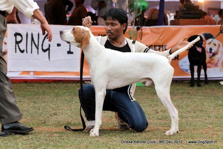 pointer,sw-68,, Orissa Dog Show, DogSpot.in