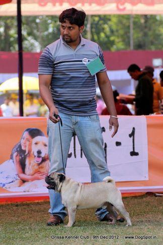 pug,sw-68,, Orissa Dog Show, DogSpot.in