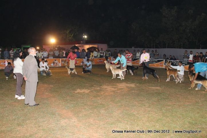 show ground,sw-68,, Orissa Dog Show, DogSpot.in