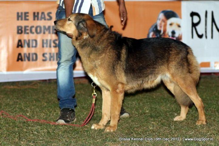 ex-204,sw-68,tibetan mastiff,, XENA OF SARAS, Tibetan Mastiff, DogSpot.in
