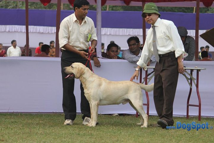 golden,sw-10,, Orissa Kennel Club 2010, DogSpot.in