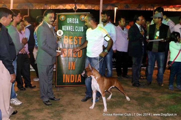 best bred in india,ex-113,lineup,sw-139,, BOND DO MIND EFFECT, Boxer, DogSpot.in