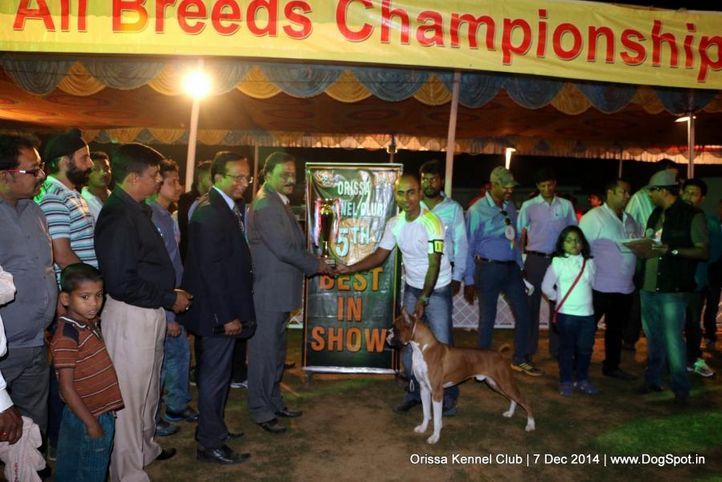 lineup,sw-139,, Orissa Kennel Club - 7 Dec 2014, DogSpot.in