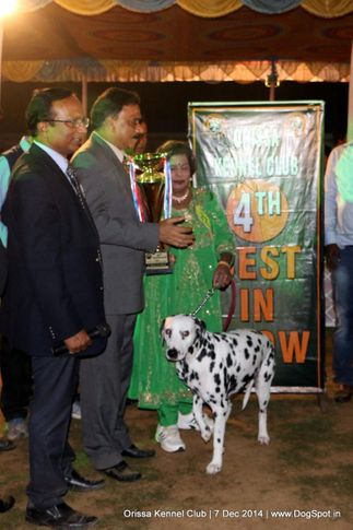 ex-27,iv best in show,lineup,sw-139,, GRAND AUST.IND. CH. KALAIVANI'S TOPSPOTT ROSEBANK AT PACEAWAY, Dalmatian, DogSpot.in