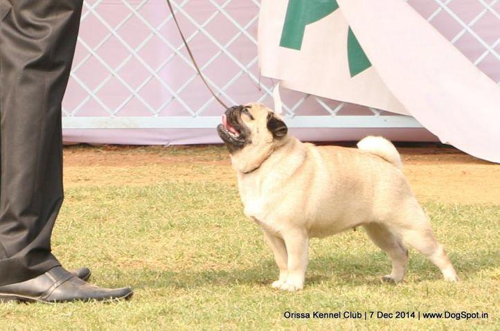 ex-13,, Orissa Kennel Club - 7 Dec 2014, DogSpot.in