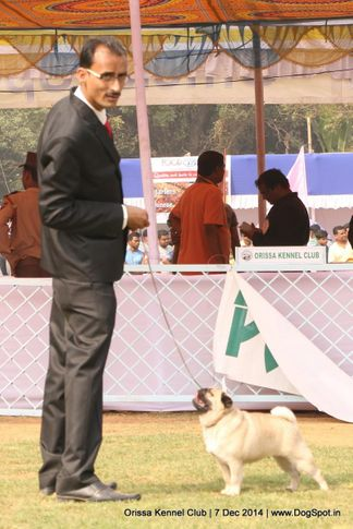 orissa kennel club - 7 dec 2014, Orissa Kennel Club - 7 Dec 2014, DogSpot.in