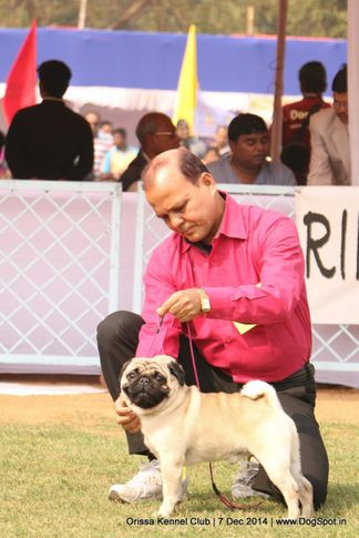 ex-14,, Orissa Kennel Club - 7 Dec 2014, DogSpot.in