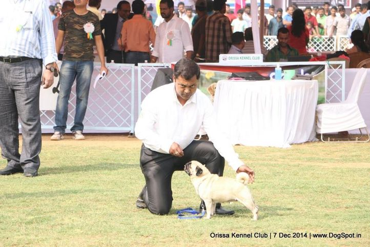 orissa kennel club - 7 dec 2014, Orissa Kennel Club - 7 Dec 2014, DogSpot.in
