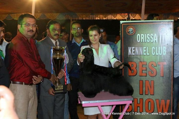 ex-71,i best in show,lineup,sw-139,, INTL.CH.GR.CH.CAN-CH.CZCH.BIS. BISS. ROMEO BLACK CHARMING LINE, Cocker Spaniel- American, DogSpot.in