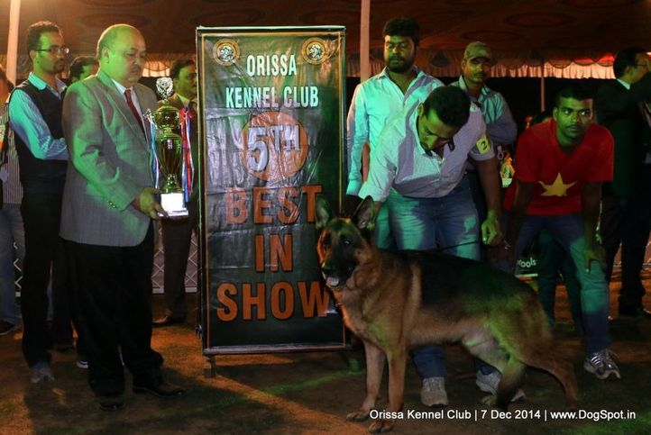 ex-222,lineup,sw-139,v best in show,, UTZY VON DER BARENSCHLUCHT, German Shepherd Dog, DogSpot.in