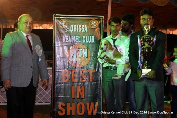 ex-41,iv best in show,lineup,sw-139,, BUNGLE WOOD'S BABY DOLL, Beagle, DogSpot.in