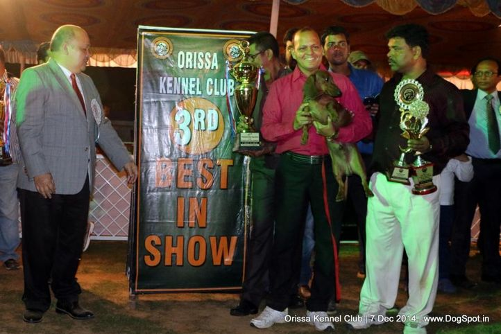 iii best in show,lineup,sw-139,, Orissa Kennel Club - 7 Dec 2014, DogSpot.in