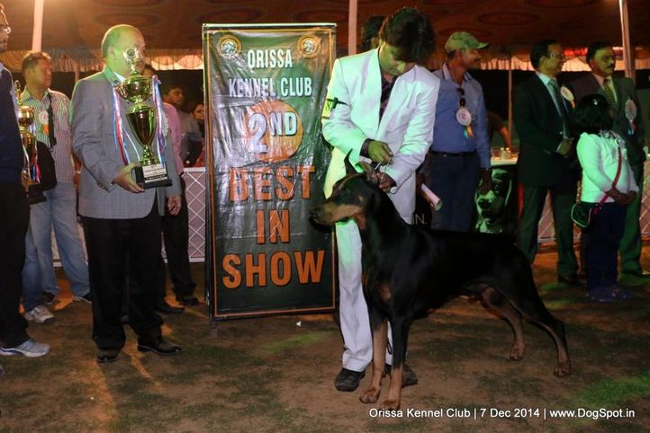 ii best in show,lineup,sw-139,, Orissa Kennel Club - 7 Dec 2014, DogSpot.in