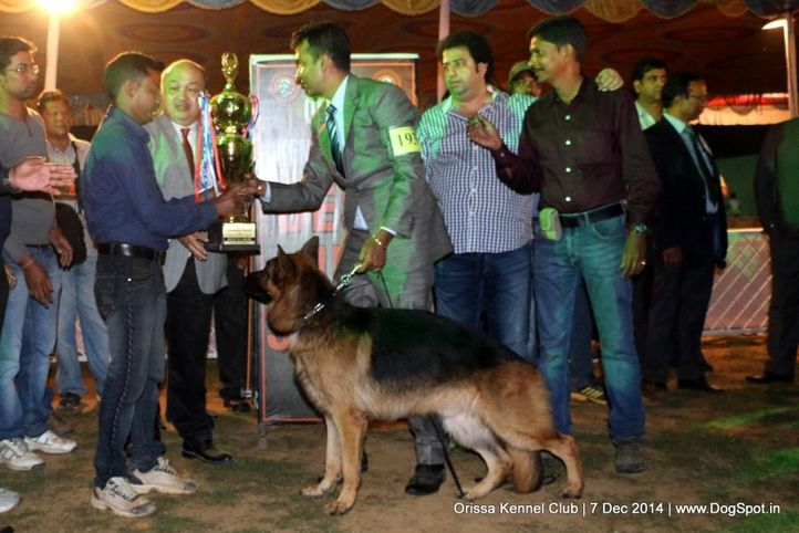 ex-193,i best in show,lineup,sw-139,, SAMSON VOM MURRTAL, German Shepherd Dog, DogSpot.in