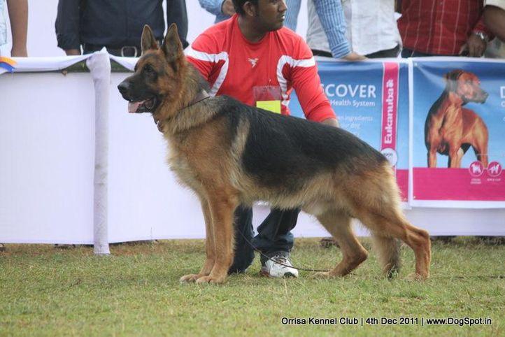 ex-168,gsd,sw-45,, ZALOR VOM FIEMERECK, German Shepherd Dog, DogSpot.in
