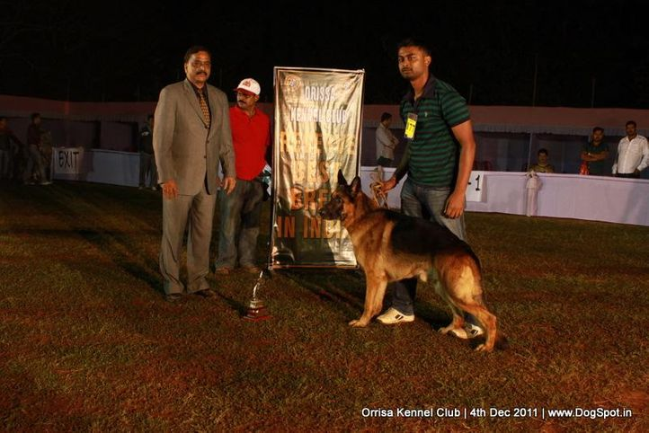 gsd,line-up,sw-45,, Orrisa Kennel Club, DogSpot.in