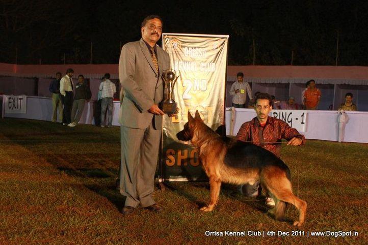 ex-193,gsd,line-up,sw-45,, YAKO VON NOORT, German Shepherd Dog, DogSpot.in