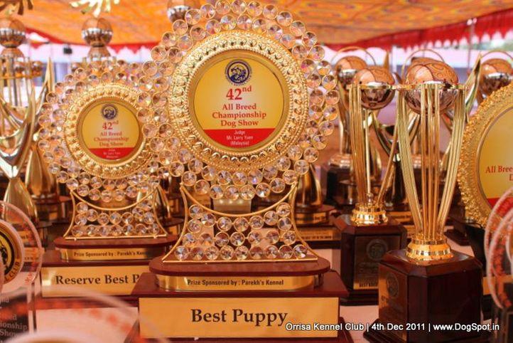 sw-45,trophies,, Orrisa Kennel Club, DogSpot.in