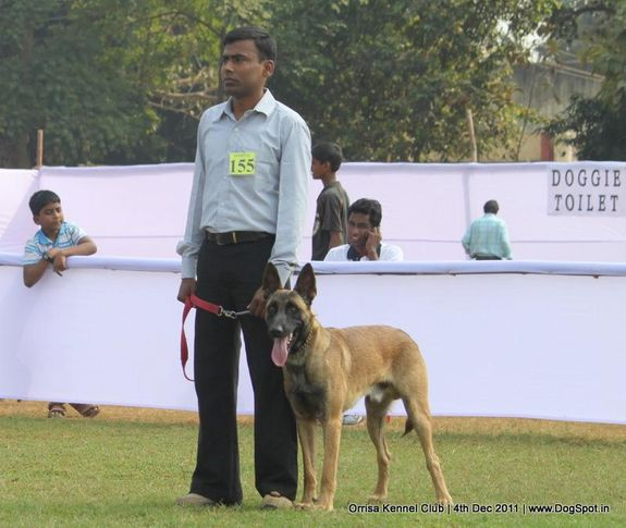 ex-155,malinois,sw-45,, STEALTH PAWS BADSHA, Belgian Shepherd Dog (Malinois), DogSpot.in