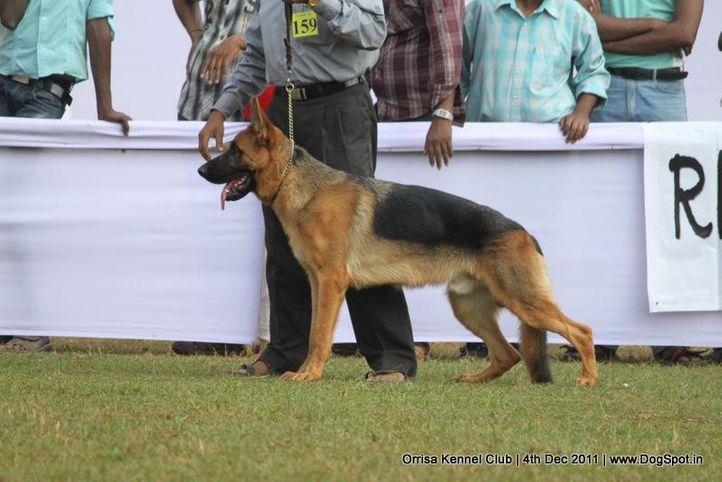 ex-159,gsd,sw-45,, FARO OF DOGMATIX, German Shepherd Dog, DogSpot.in