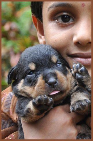 our new litter   multi champion oskar crni vitez xgo  int ch gil on huas milsped, OUR NEW LITTER   MULTI CHAMPION OSKAR CRNI VITEZ xGO  INT CH GIL ON HUAS MILSPED, DogSpot.in