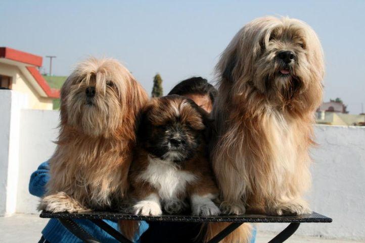 pansy, romeo3, jumbo, Pansy, Romeo3, Jumbo, DogSpot.in
