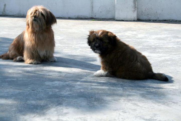 pansy, romeo3, Pansy, Romeo3, DogSpot.in