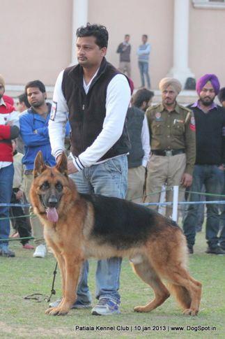 ex-228,german shepherd,sw-80,, VICTOR VOM ZELLWALDRAND, German Shepherd Dog, DogSpot.in