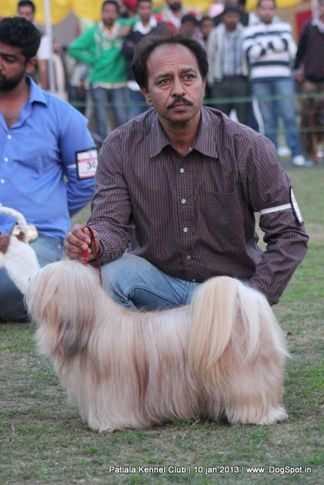 lhasa-apso,sw-80,, Patiala Dog Show 2013, DogSpot.in