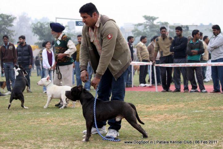 sw-32,terrier,, Patiala Kennel Club 2011, DogSpot.in