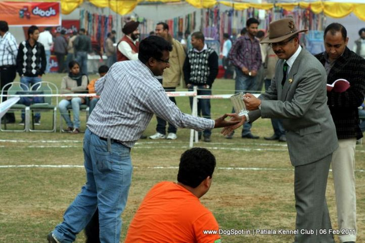 spitz,sw-32,, Patiala Kennel Club 2011, DogSpot.in
