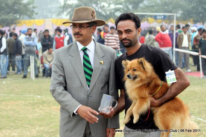 ex-52,spitz,sw-32,, SCOOBY, Greater Indian Spitz, DogSpot.in