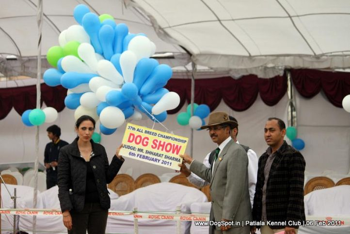ground,judges,sw-32,, Patiala Kennel Club 2011, DogSpot.in
