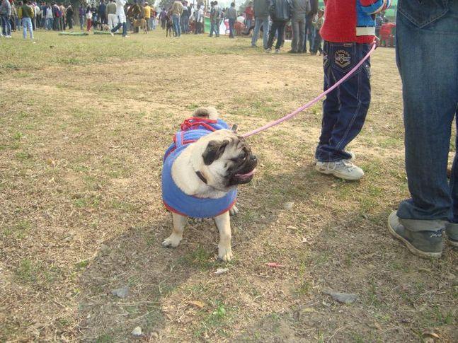 patna dog show 2012, patna dog show 2012, DogSpot.in