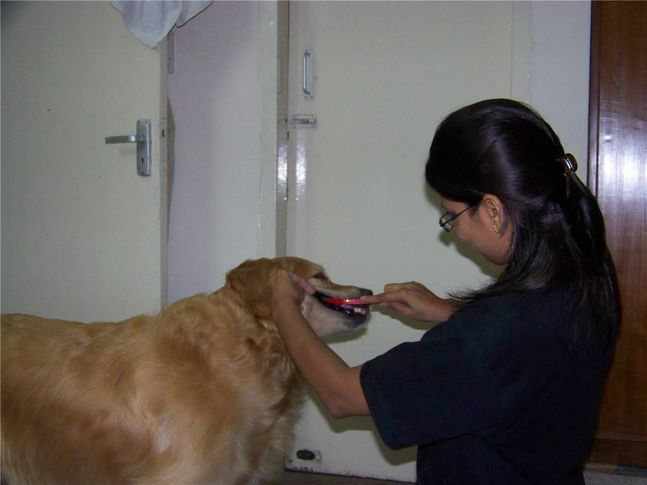 , PetSpot Services: Teeth cleaning, DogSpot.in
