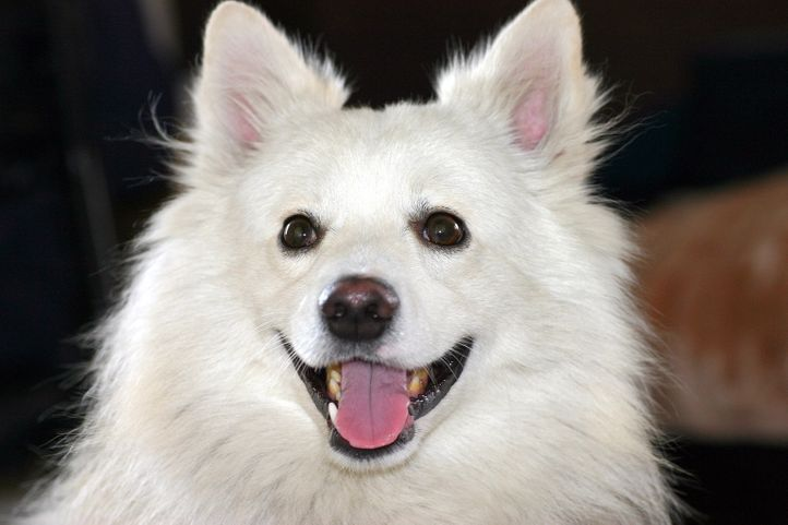 Picasa 2.7,, Sweetu, DogSpot.in