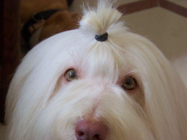 , Petspot, DogSpot.in