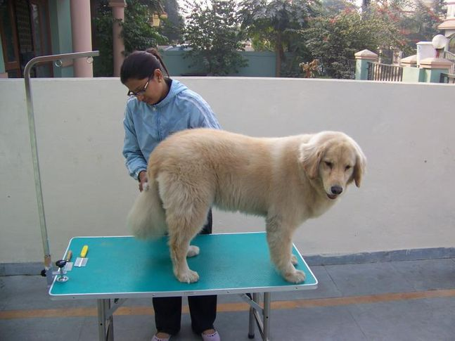 Shyna, Grooming, Petspot, DogSpot.in