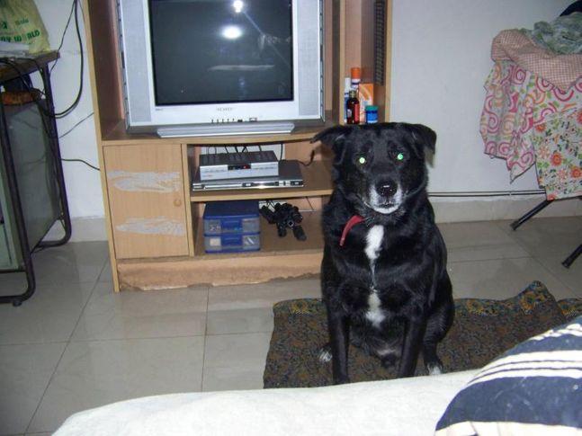 Gabbar, Petspot, DogSpot.in