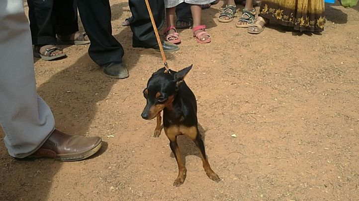 bangalore dog show photos, Pointer, DogSpot.in