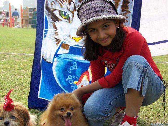 Pomeranian, Lhasa, Pomeranian, Lhasa, DogSpot.in