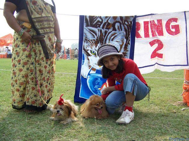 Pomeranian, Lhasa, Pomeranian, DogSpot.in