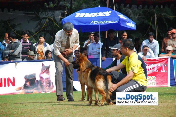 GSD,, Pune 2010, DogSpot.in